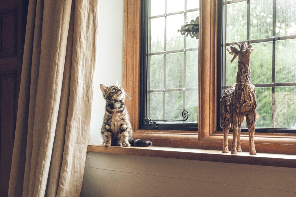 ペットのいる家